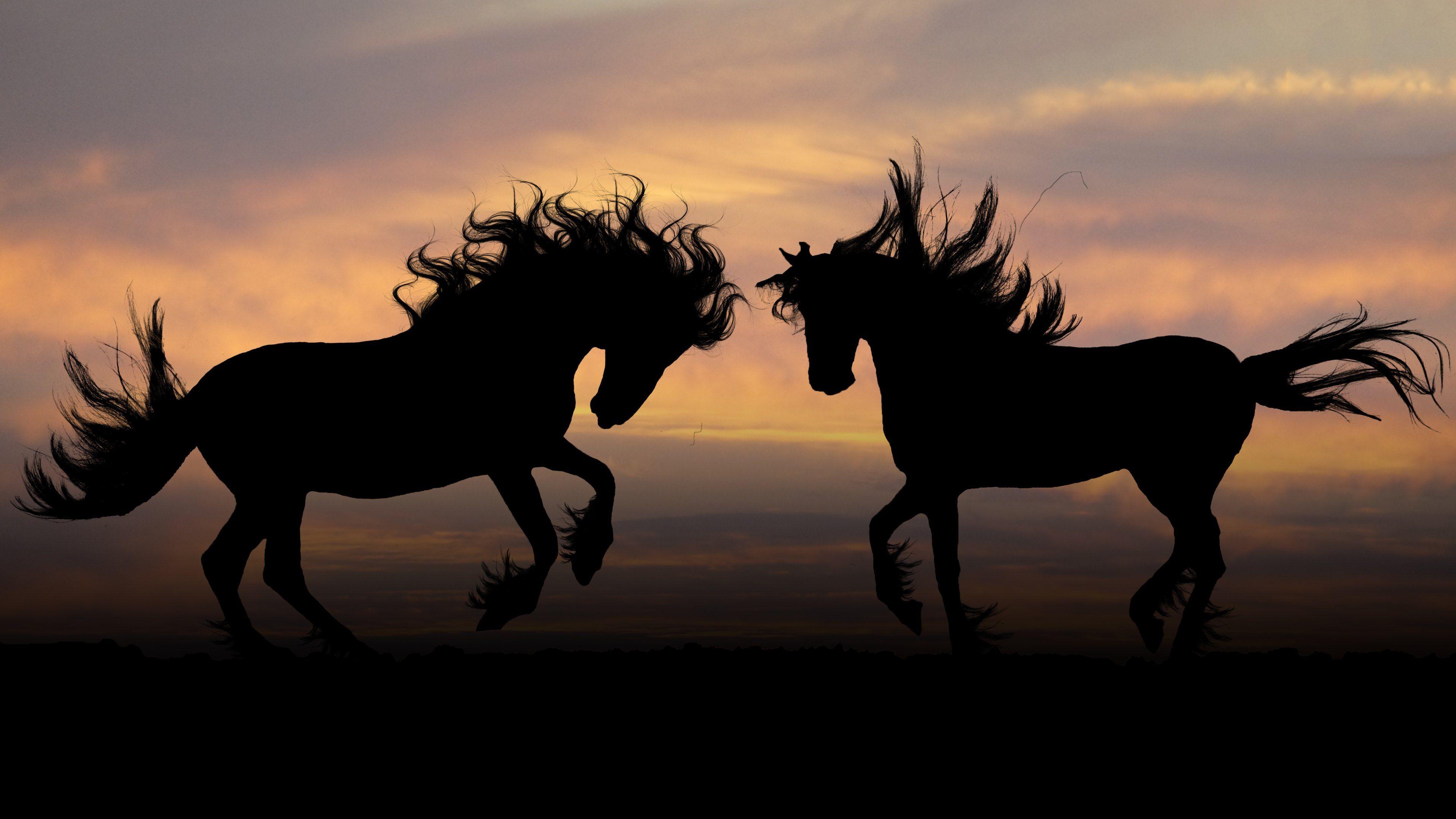 Horse 4k Ultra Hd Wallpaper Horse Silhouettes Hd Wallpapers 4k Wallpapers