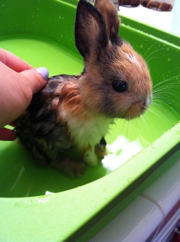 Bunny Bath Time Even Though They Are As Clean As Cats And Don T