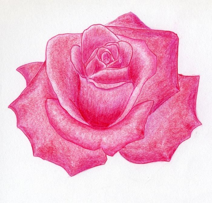 Very simple how to draw a rose step by step tutorial. in ...