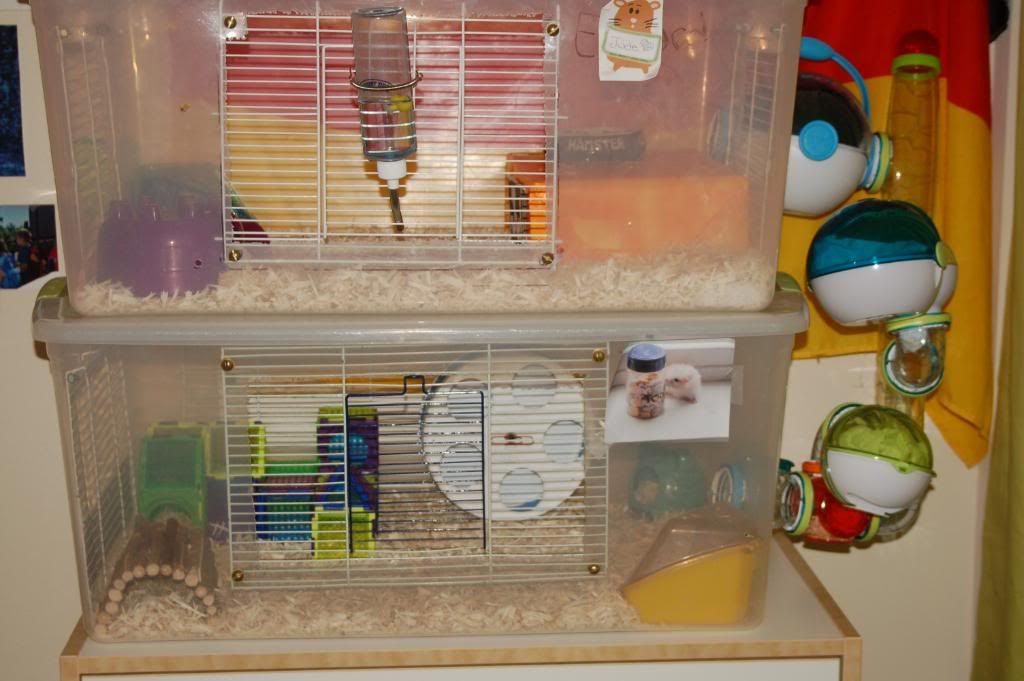 Homemade hamster cages hamster hideout forum small for Plastic bin guinea pig cage