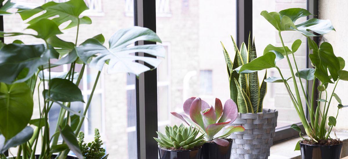 Stell av grønne planter
