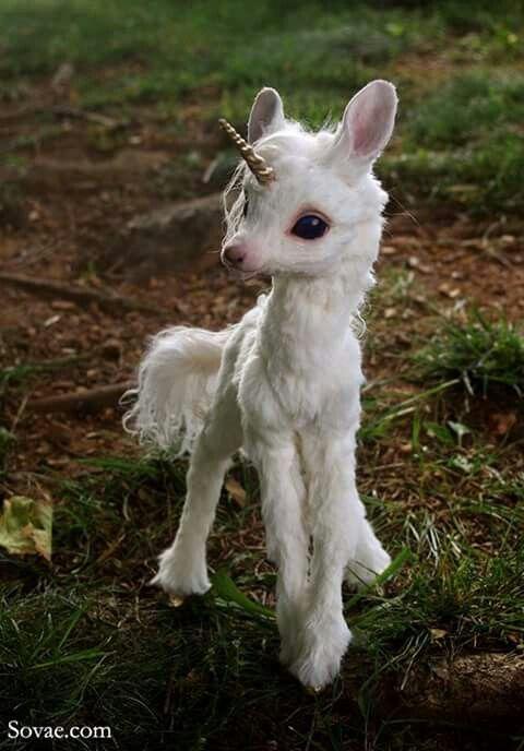 Pin By Lizzie Jean Art On Unicorns Cute Animals Baby Animals Pictures Cute Baby Animals