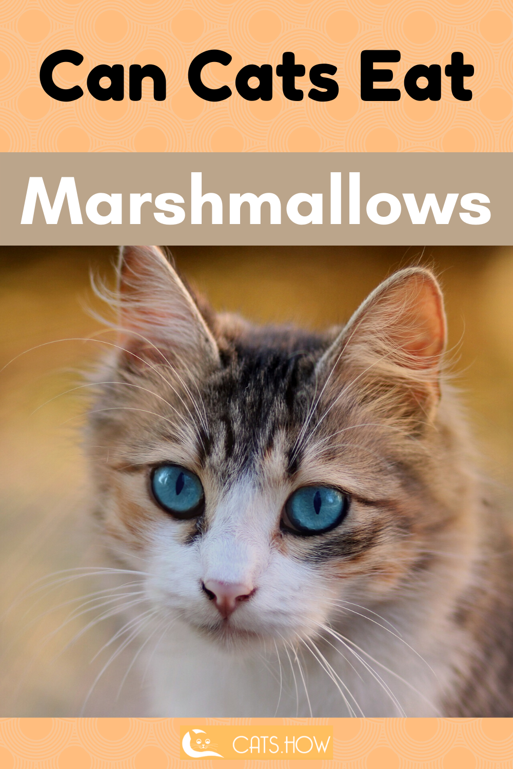 ᐉ Can Cats Eat Marshmallows in 2020 (With images) Cat