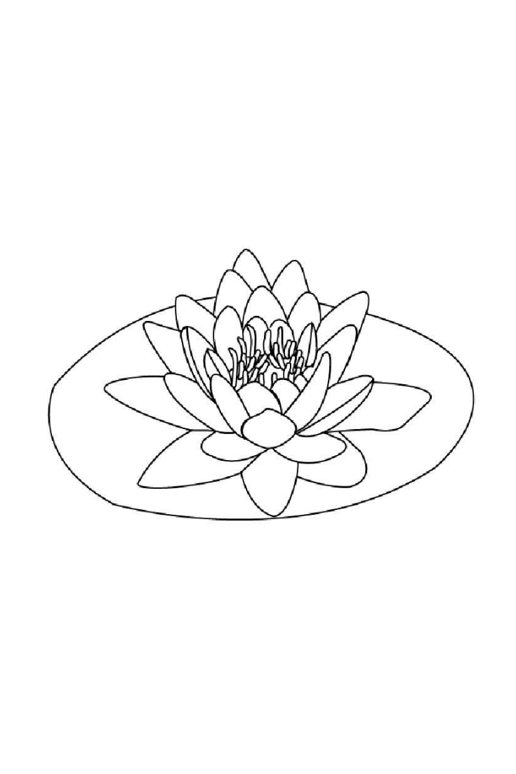 Lilac Coloring Page Flower Lotus