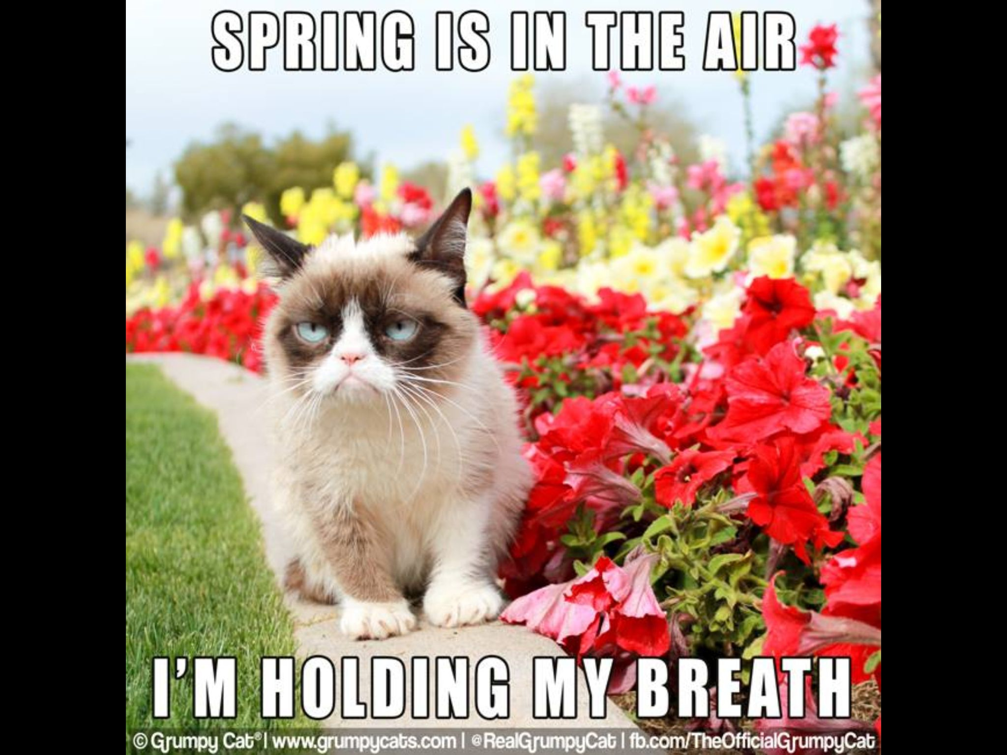 It S March In Utah And I M Holding My Breath Too Funny Grumpy Cat Grumpy Cat Meme Grumpy Cat Humor