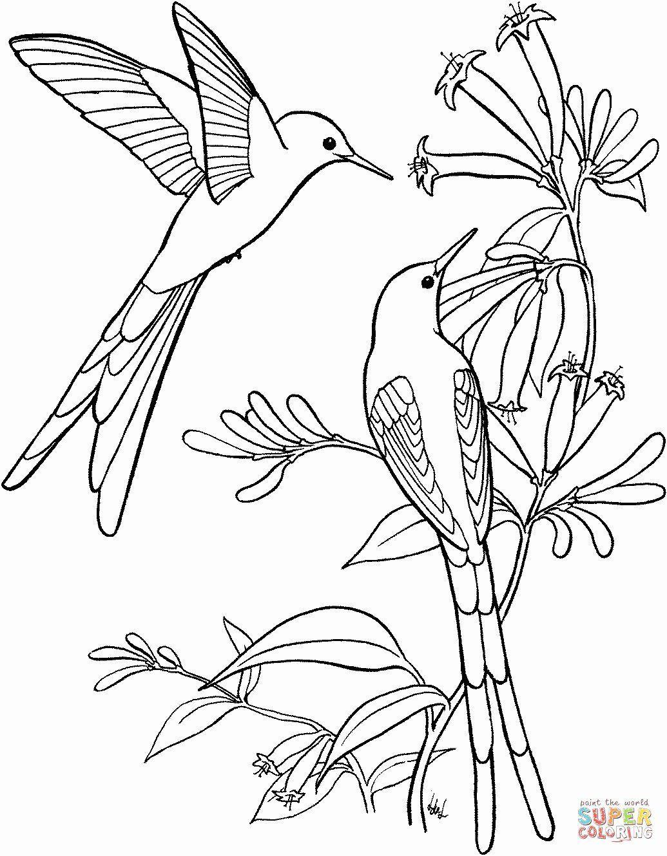 Natur Farbton Vogel Luxuskolibri Farbtonseiten   Bird ...