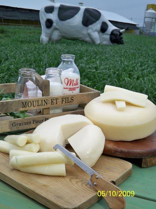 1박2일 낙농체험 (펜션) 치즈체험 낙농체험 소세지체험 요리체험 기타