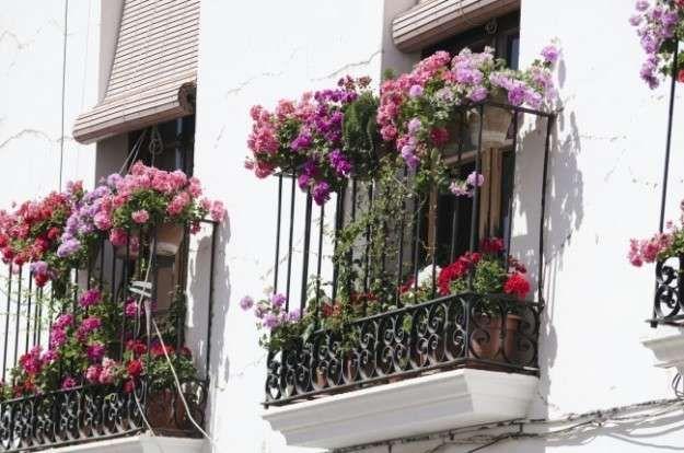 Flores colgantes para balc n fotos plantas flores para - Mesa colgante para balcon ...