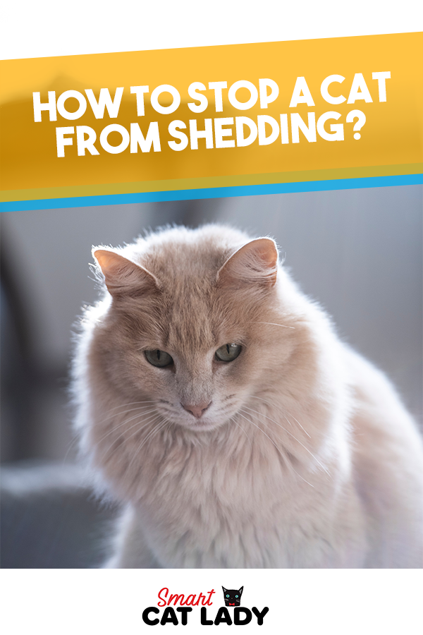 How to Stop a Cat from Shedding? Cats, Cat shedding, Cat