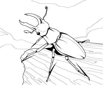 Beetle Coloring Page - GetColoringPages.com  |Stag Beetle Coloring Page