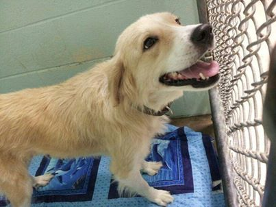 Va To Me Delilah Is A 4 Year Old 50 Lb Golden Retriever Mix
