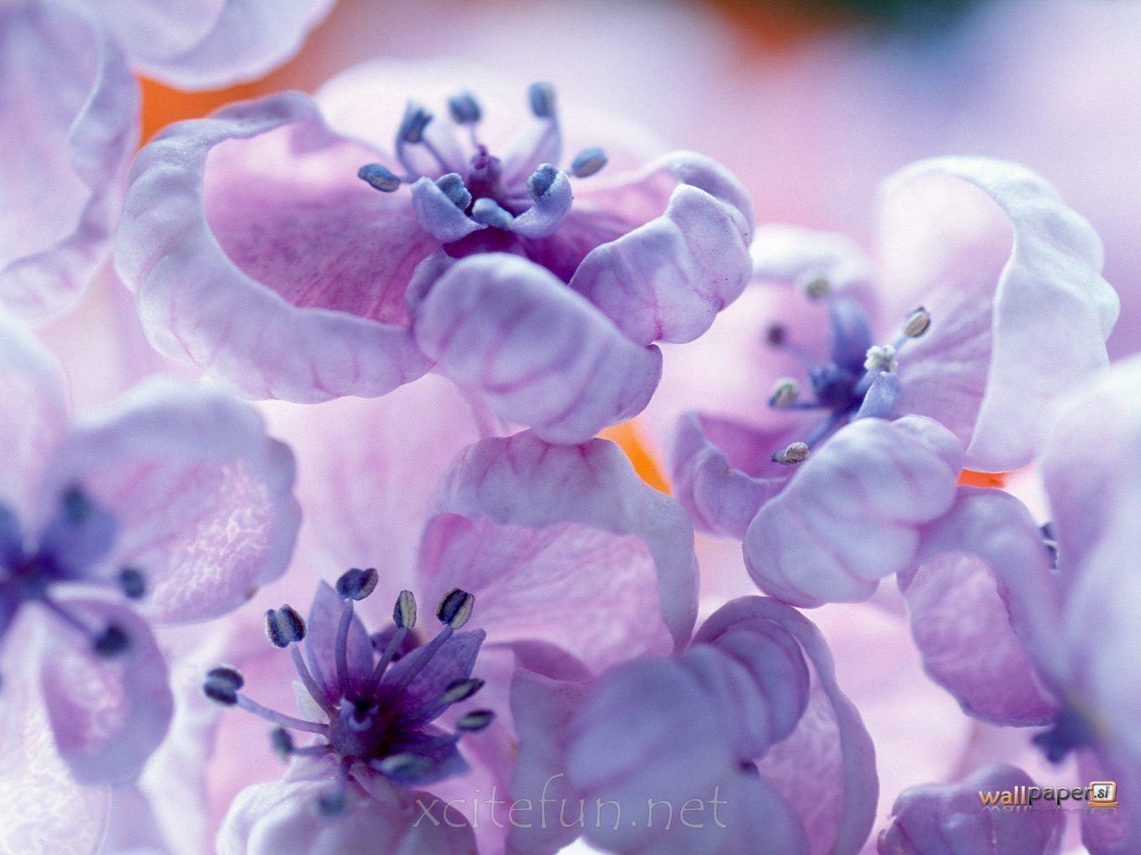 Worlds most beautiful flowers most beautiful flower wallpapers worlds most beautiful flowers most beautiful flower wallpapers izmirmasajfo