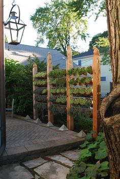 Make A Garden Wall Get crafty and make your very own garden wall! This not only serves the purpose of creating privacy, but also gives you more room to grow an herb garden by using vertical space, and could potentially mask an unattractive wall or neighboring home.