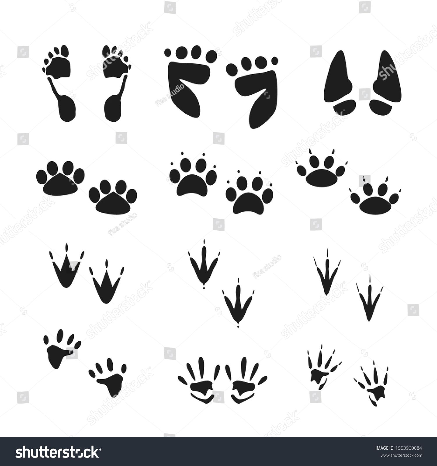 Vector Of Human And Animal Footprints Image Vector