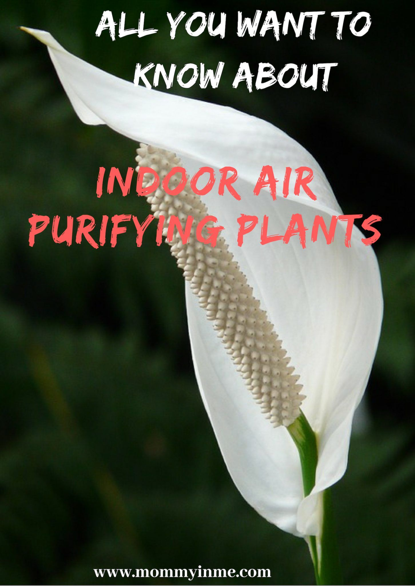 6 Indoor Air purifying plants Indoor air purifying