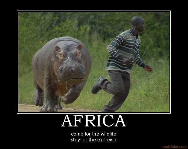 Best Ever Funniest Wildlife Photo Memes of 2016