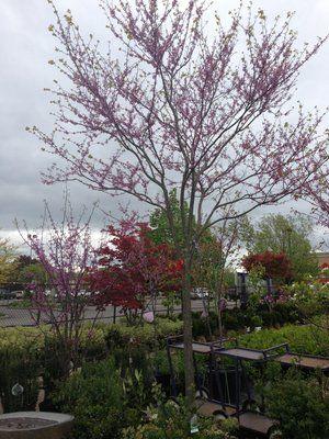 Menne Nursery And Garden Artistry 716 693 4444 3100 Niagara Falls Blvd Buffalo Ny 14228