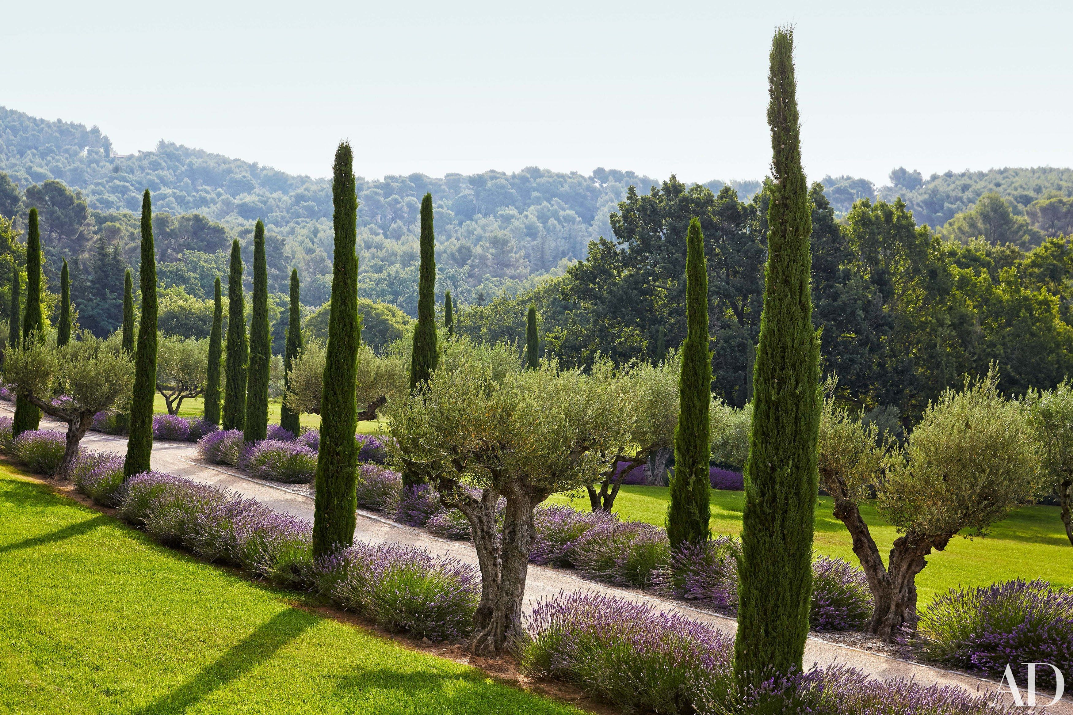 Frédéric Fekkai's entrance drive is lined with olive trees, lavender, and Provençal cypress, a symbol of welcome. Aix-en-Provence