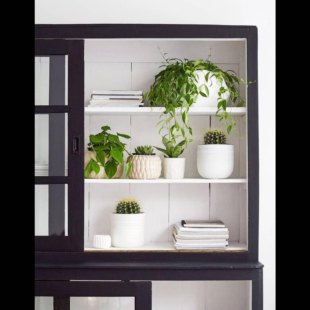 une decoration vegetale via des plantes disposees dans un vaisselier