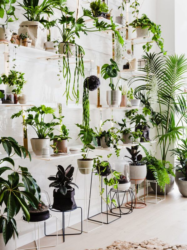 Ivy Muse · Botanical Emporium | Balkon pflanzen, Garten eden und ...