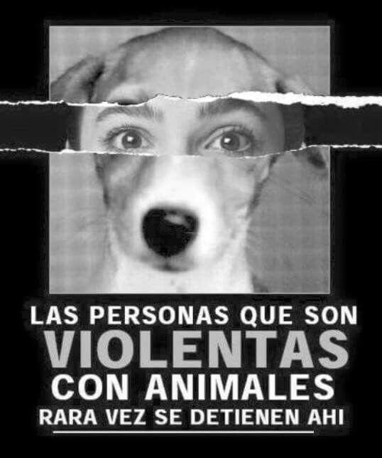 Las personas violentas con los animales rara vez se detienen ahí
