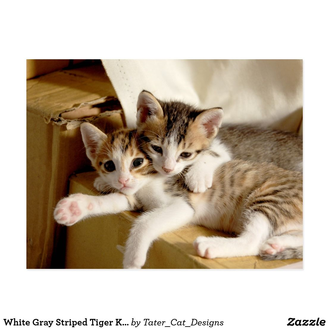 White Gray Striped Tiger Kitten Buddies Cats Cat Facts Kitten Pictures