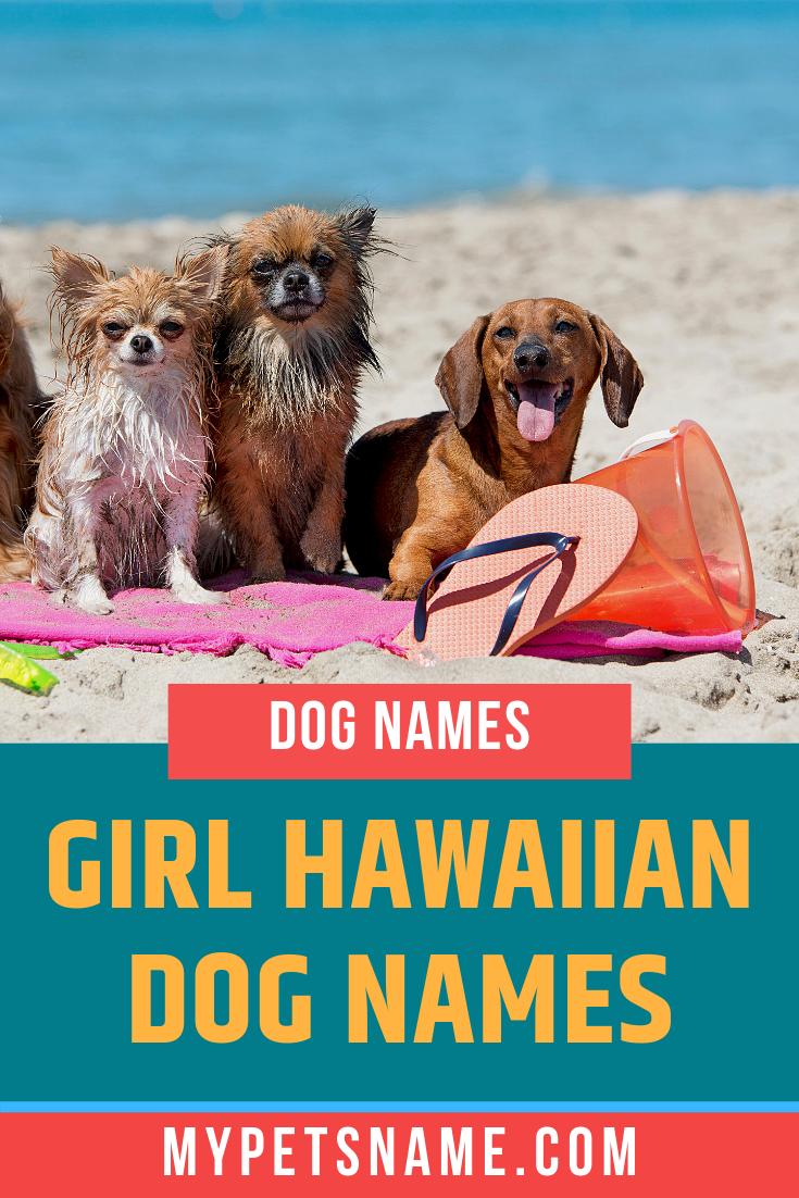 Girl Hawaiian Dog Names Hawaiian Dog Names Dog Names Girl Pet Names