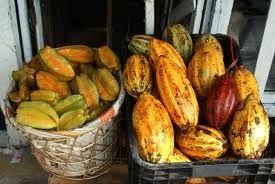 Frutas brasileiras - Pesquisa do Google Carambola e cacau  ( matéria prima do chocolate )