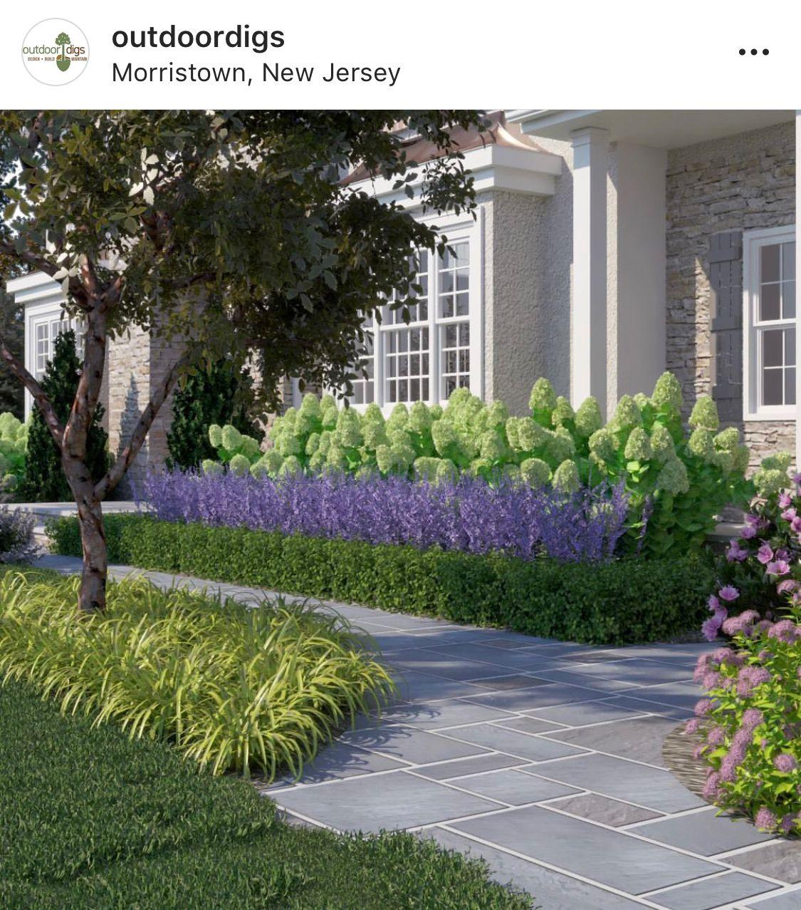 Hydrangeas And Lavender Garden Landscape Design Hydrangea Landscaping House Landscape