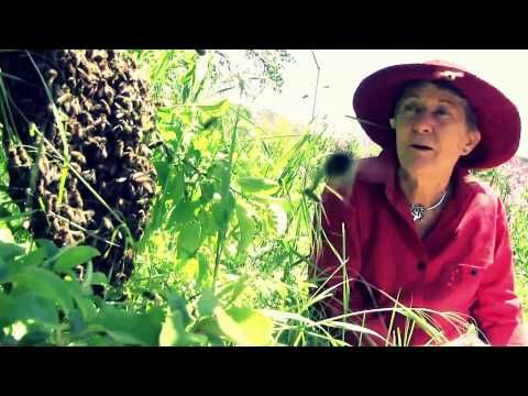permaculture documentary : Qu'est ce que la permaculture ? avec Rosemary Morrow - YouTube