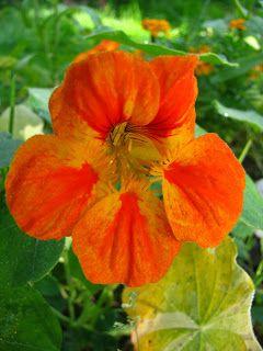 @T.ästä tulee meidän talo!: Kukkia