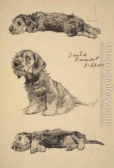 Dandie Dinmont Puppies Animal Drawings Dog Paintings Animal
