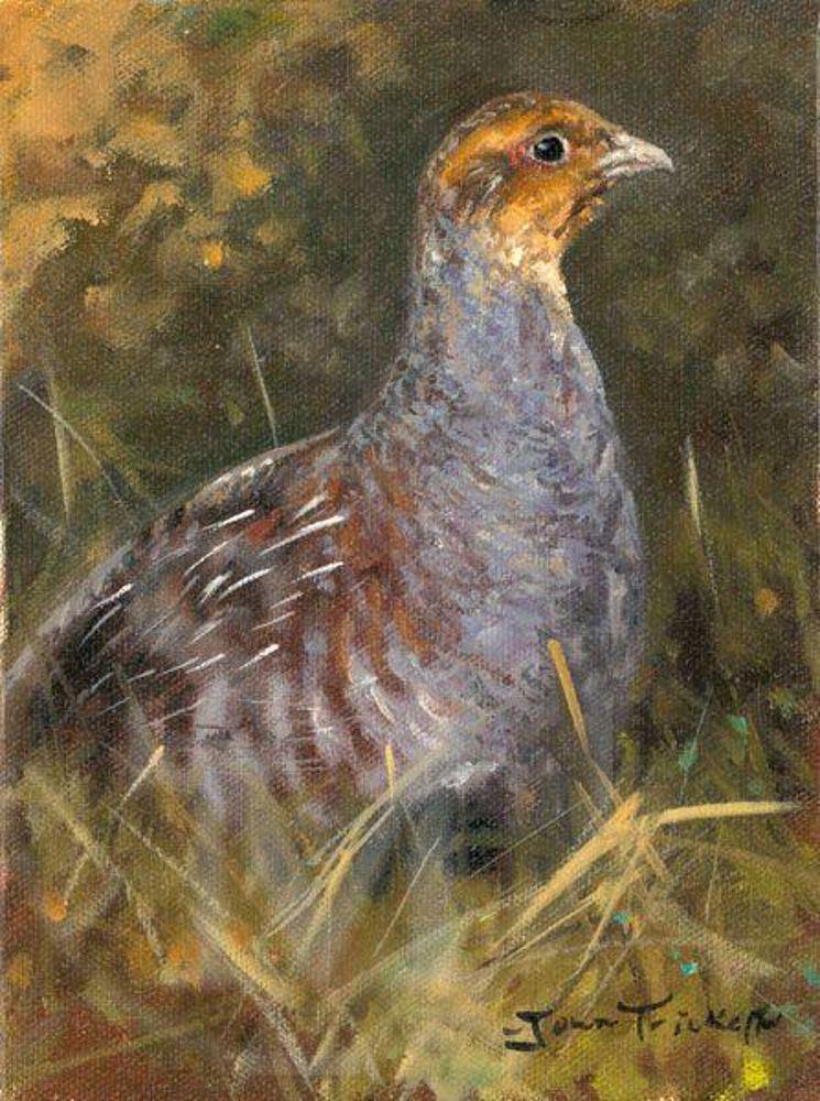 Best Partridge Study Game Bird Painting By John Trickett 400 x 300