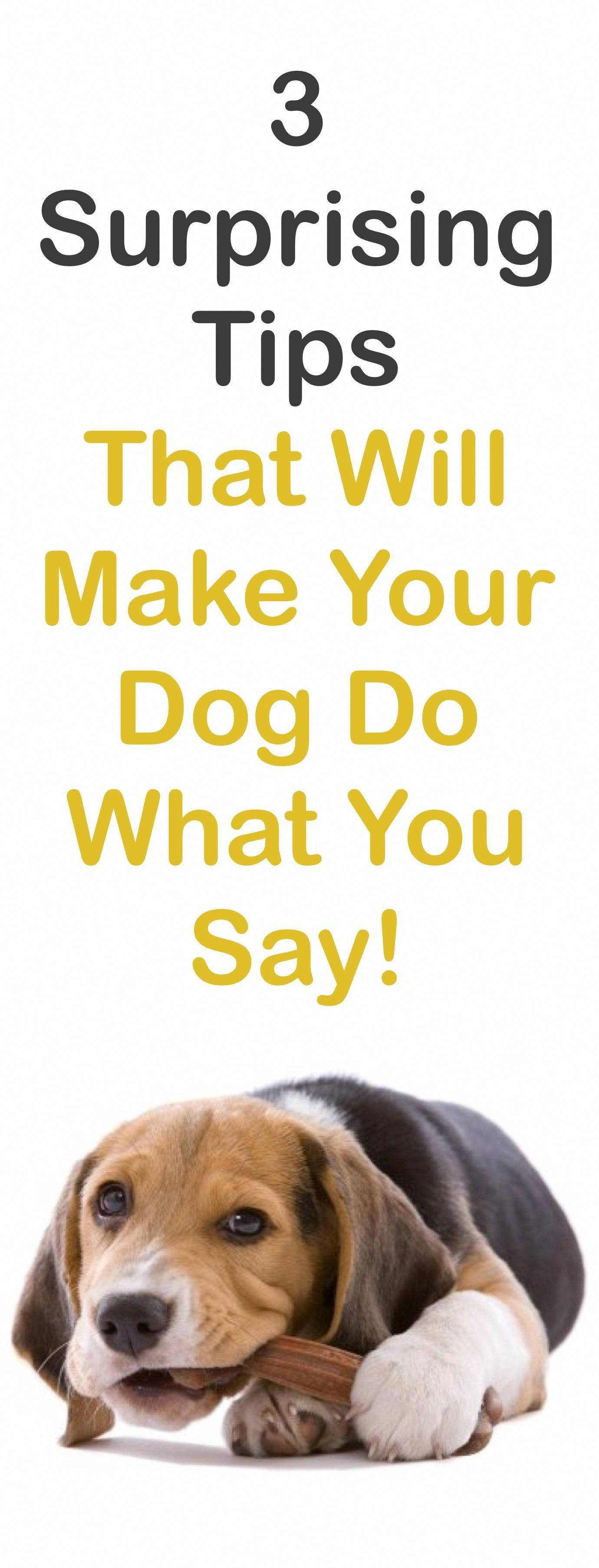 3 Tips That Will Make Your Dog Do What You Say