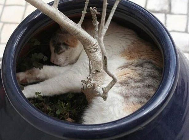 Sleeping Cat In A Vase Awesome And Cute Sleeping Cat Photos
