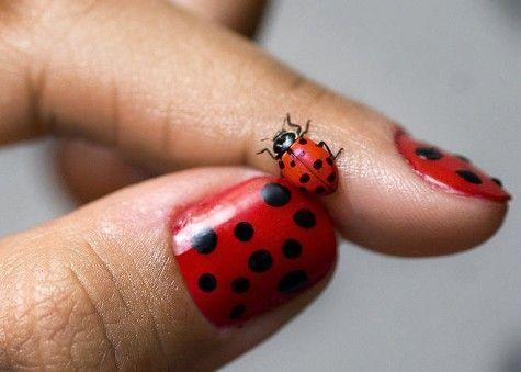 Piccsy Lady Bug Nail Art Nails Pinterest Lady Bugs