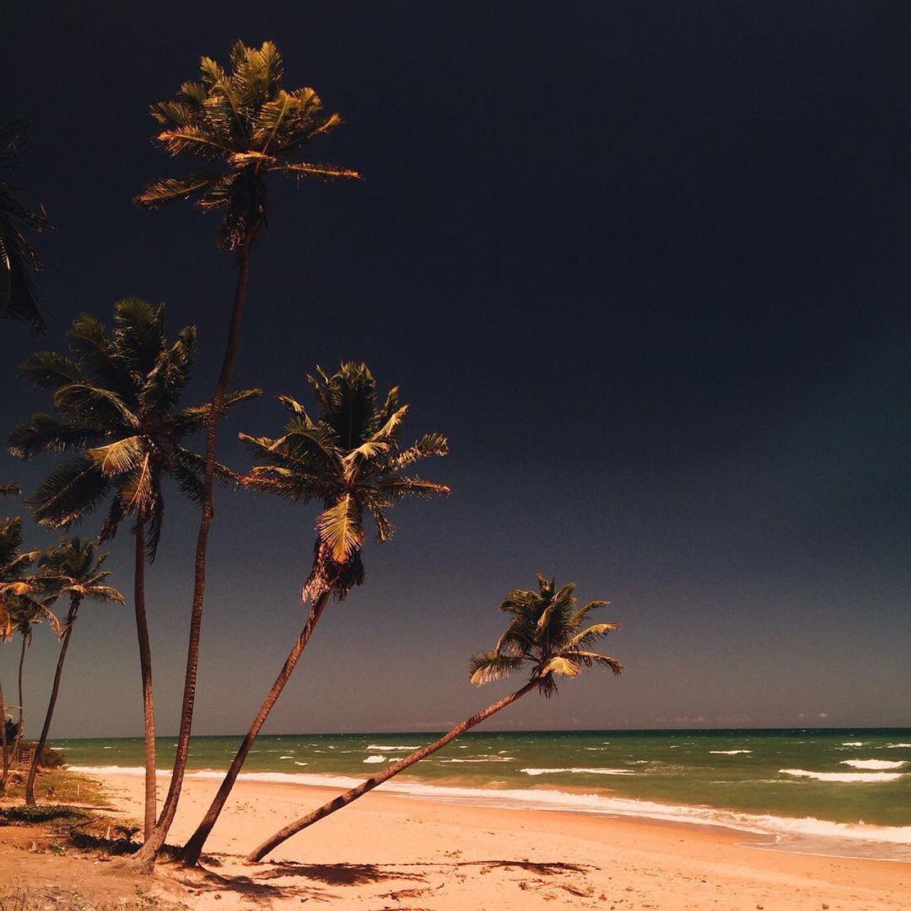 tropical vibezz