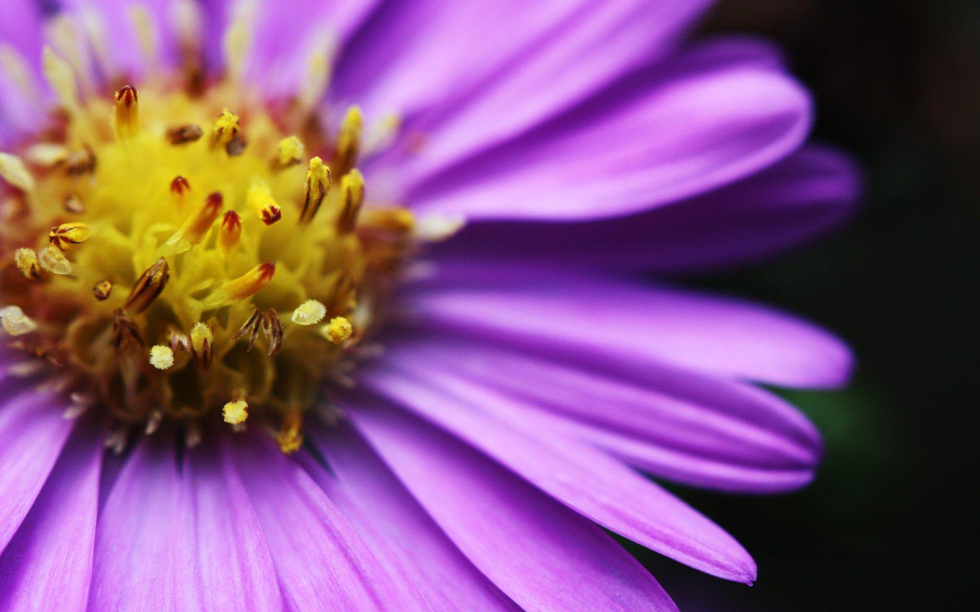 Hd Beautiful Bright Flower Deskop Ololoshenka Pinterest Bright