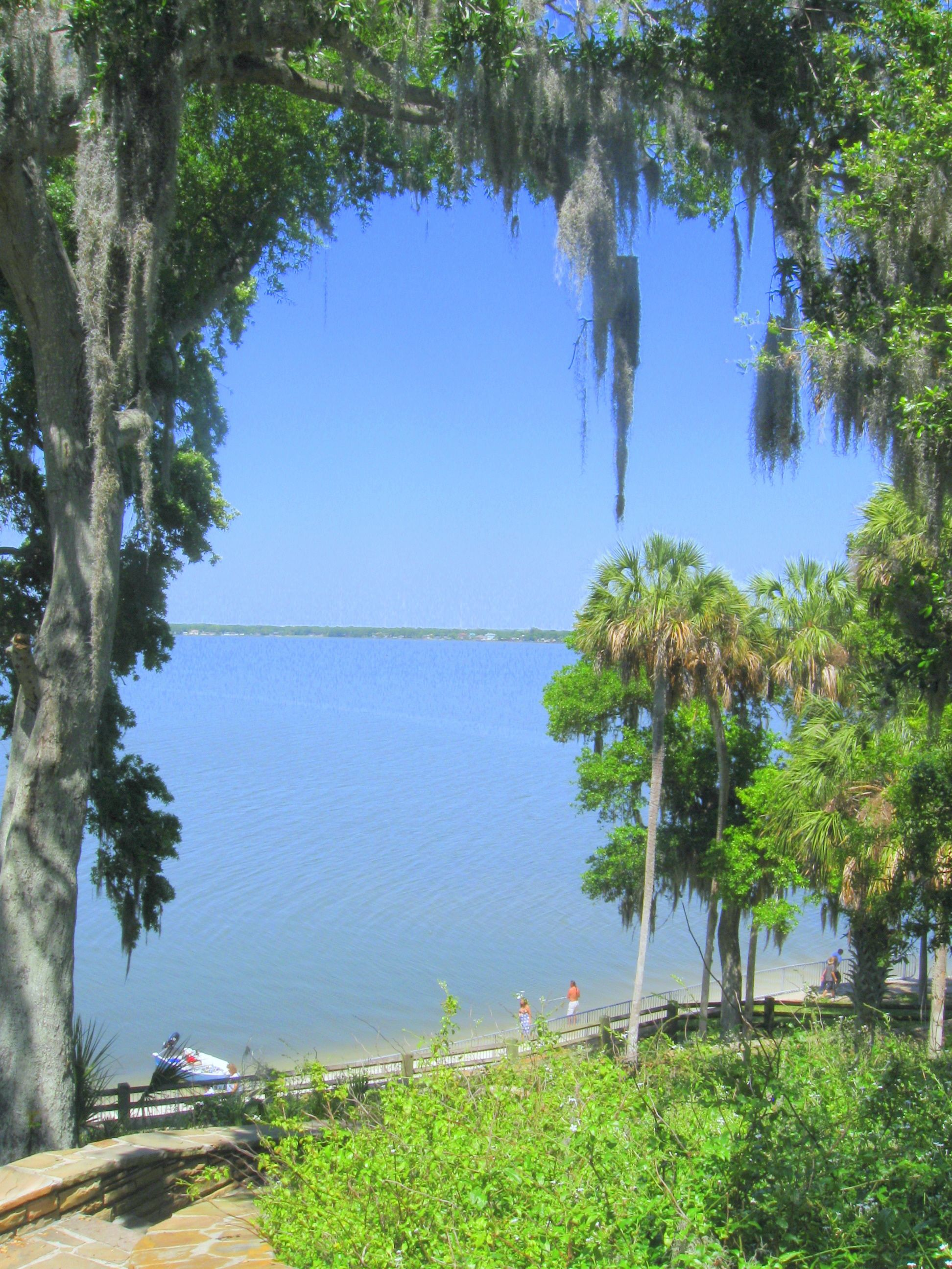 Philippe Park Safety Harbor Fl My Former Home Florida Attractions Safety Harbor Places In Florida
