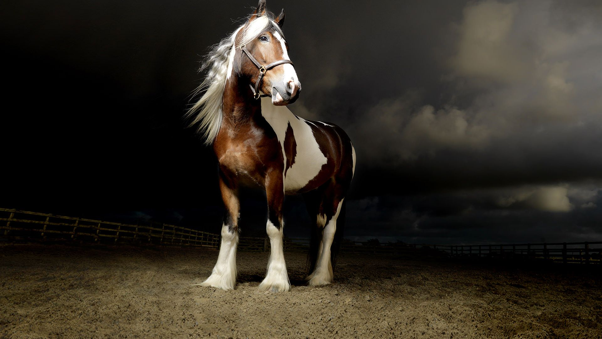 Matthew Seed The Horse Photographer Jpg 1 920 1 080 Pixels Horse Photography Horse Photographer Horses