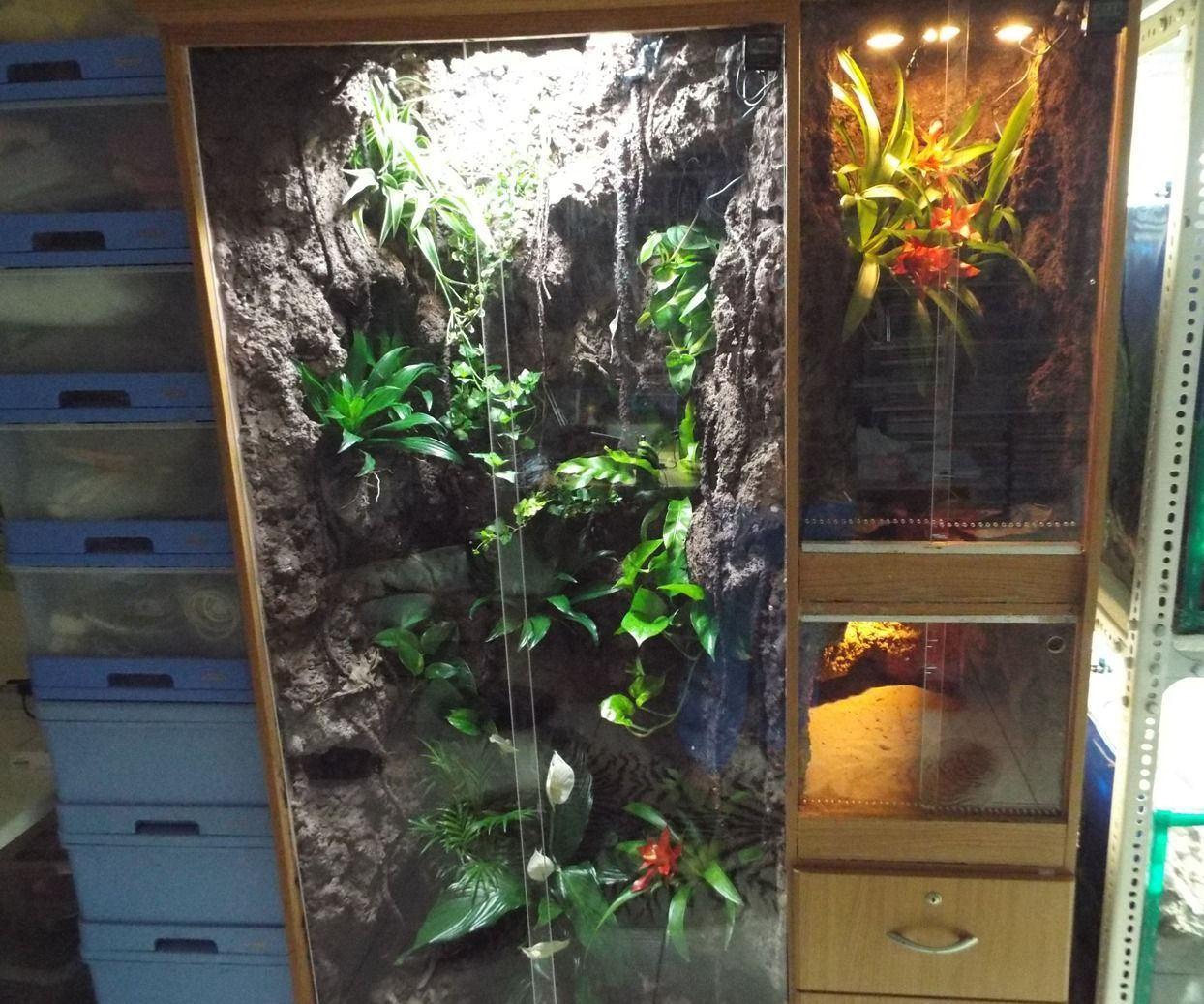 Converting Clothes Cabinet Into A Multiple Vivarium
