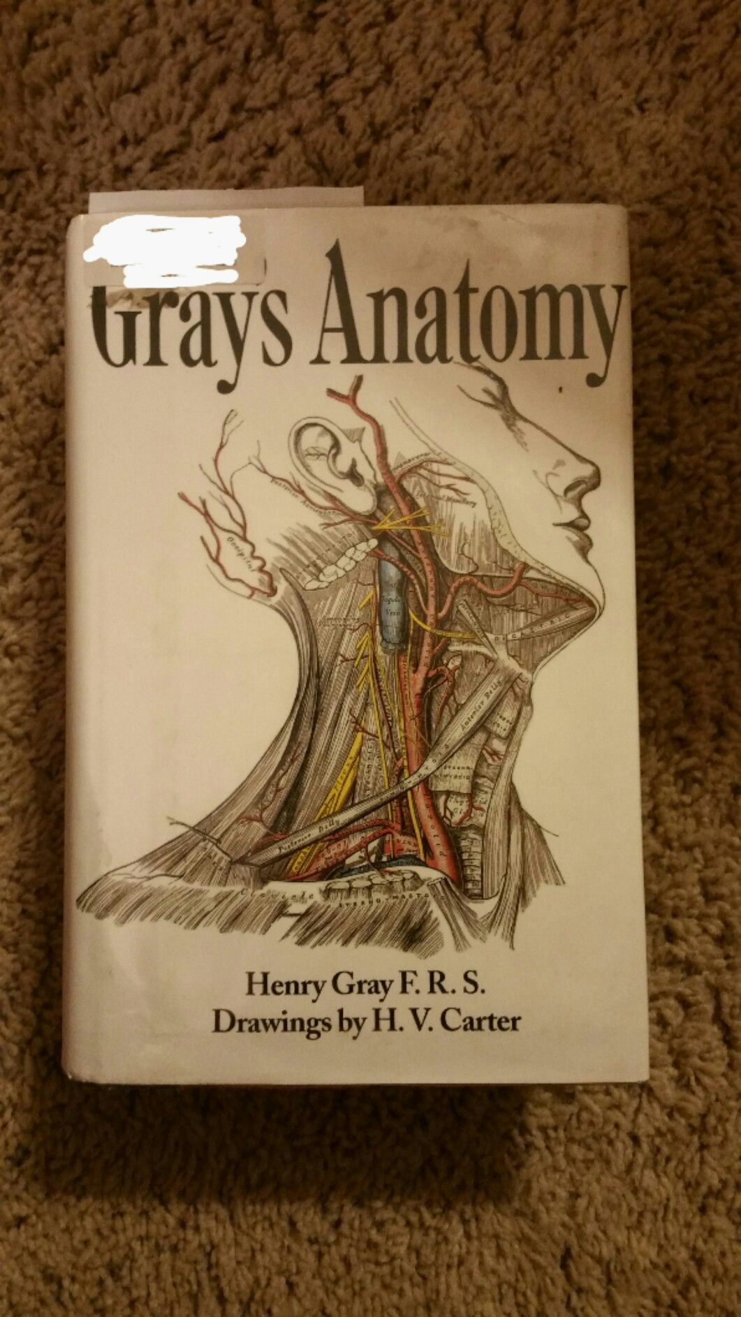 For all you Grey\'s fans and those who think they want to be a ...