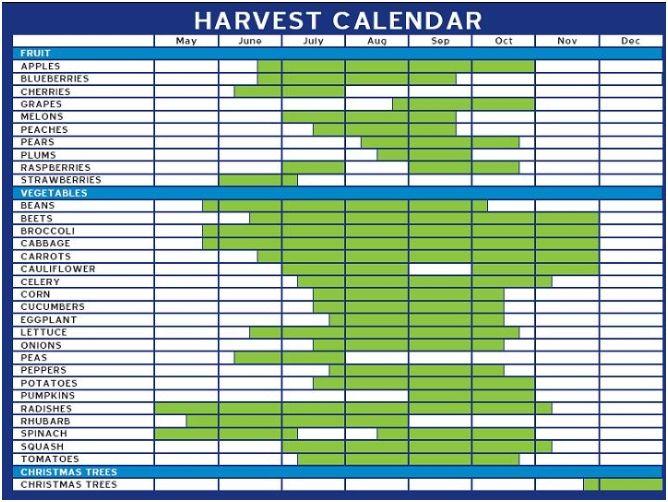 Harvest Calendar Just Because Vegetable Garden