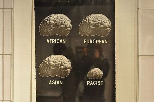 Comparación de cerebros humanos de distintas razas.