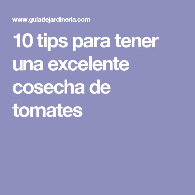 10 tips para tener una excelente cosecha de tomates