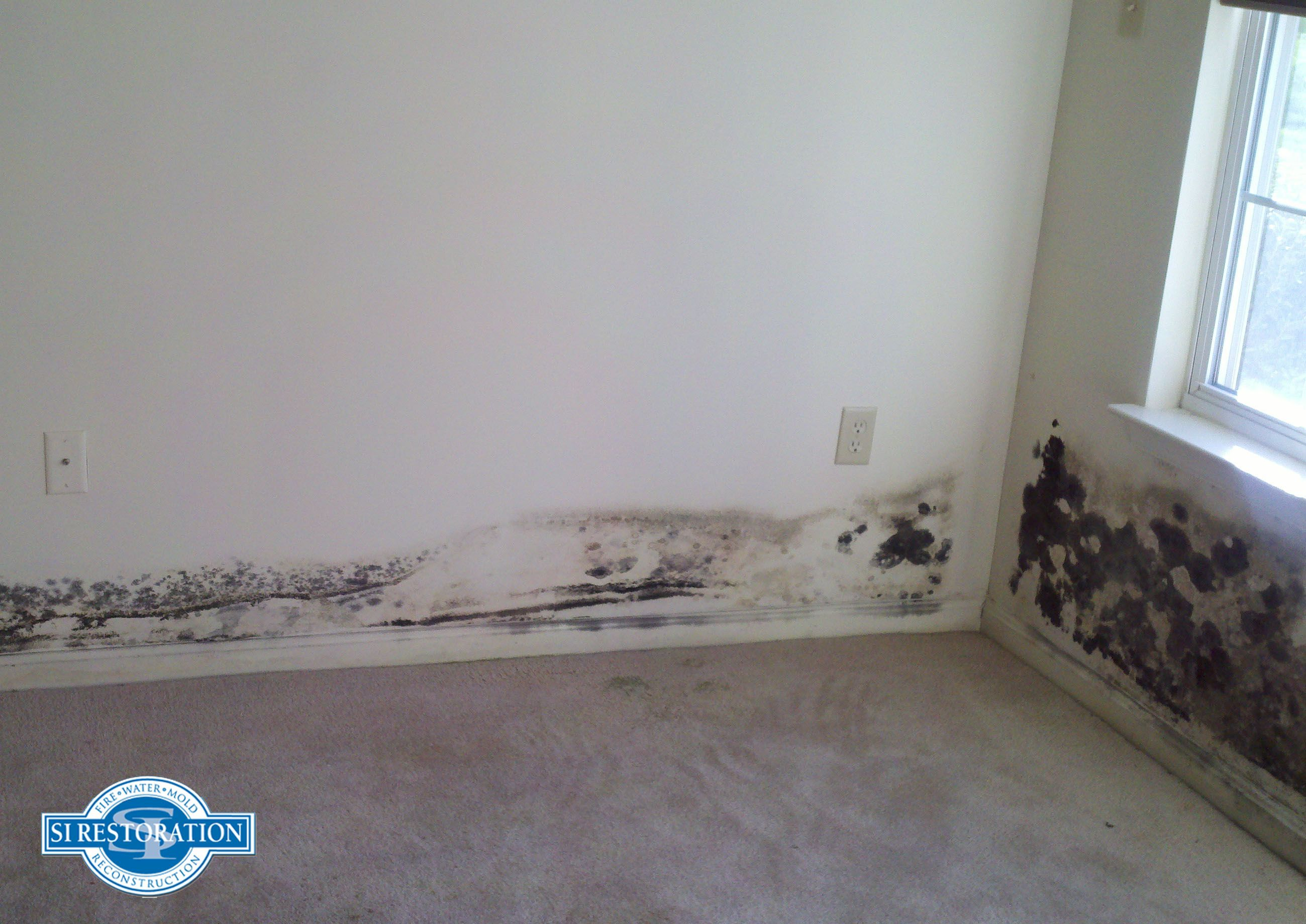 Mold on sheetrock mold removal pinterest What sheetrock to use in bathroom