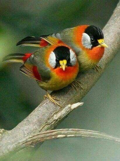 Birds 2 Backyard Journaling Natural Beauty Beautiful Colors Exotic Flowers Garden
