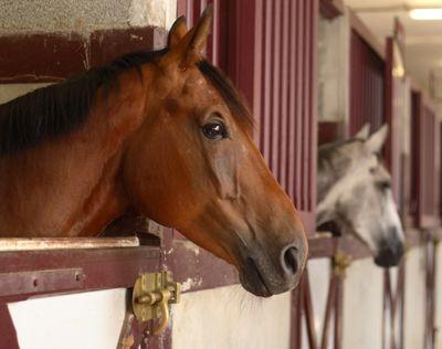 Being Prepared Before Horse Emergencies Happen