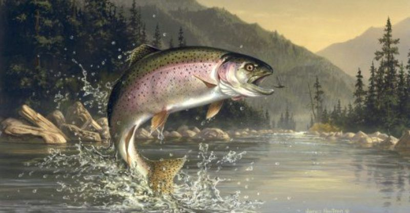 Image result for image of rainbow trout jumping out of the ...