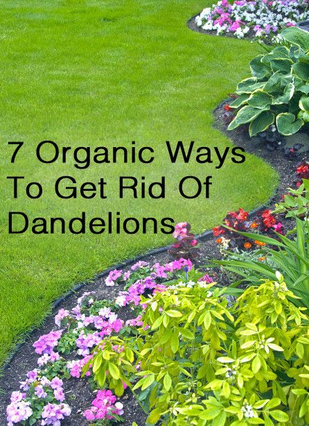 How To Get Rid Of Dandelions From A Lawn